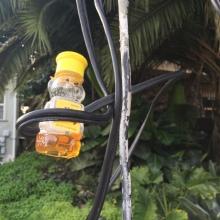 Honey Hostage, 2016