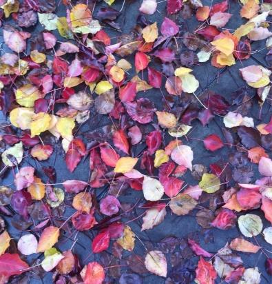 Leaves, 2016