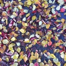 Leaves ll, 2016